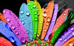 Rainbow Flowers 17362 1920x1200 px