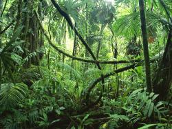 this part of the rainforest is under the leaves but above the ground