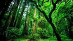 ... Conserve Animals – Rainforest ...
