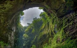 Rainforest Hole