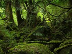 ... Rainforest Wallpaper Landscape ...