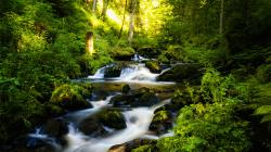 Beautiful Rainforest Wallpaper 3374