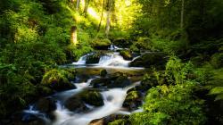 Beautiful Rainforest Wallpaper 3374