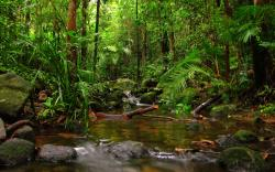HD Rainforest Wallpaper