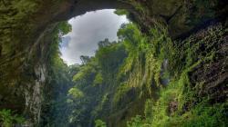 Rainforest Wallpaper Hd Large Database 1920x1080px