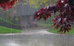Beautiful Romantic Rainy Day Message · Rainy Day Natural Wallpaper