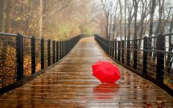 ... Rainy Wallpaper ...