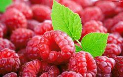 Tons Of Raspberries