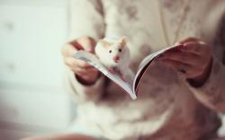 Rat Book Girl Mood