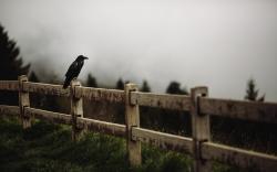 Raven Bird Fence