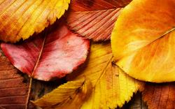 Red and Yellow Leaves Wallpaper