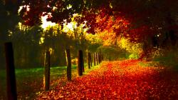 Autumn Scenery 23960