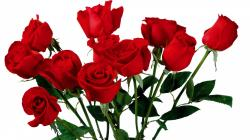 Red Flowers For Weddings Creative