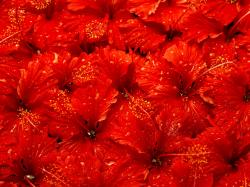 ... Red Flowers Wallpaper ...