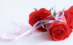 ... Red Flower Wallpaper 3 ...