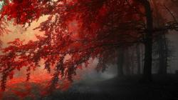 Red Forest ...