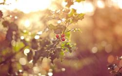 Red Forest Fruits Nature Macro