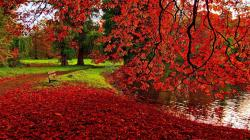 ... Fallen red leaves wallpaper 1920x1080 ...