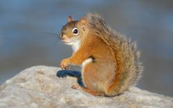 A Red Squirrel in the morning light at Andrew Haydon Park.