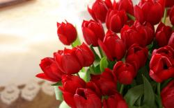 Red Tulips Wallpaper ...