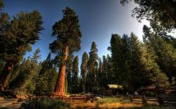 Redwood · Redwood · Redwood · Redwood ...