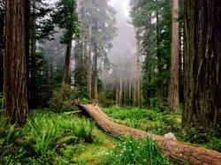 "The trees, the smell of the ocean creates a great combination (naturally made) which one can clear his/her mind and truly relax."" In short Redwood National ..."