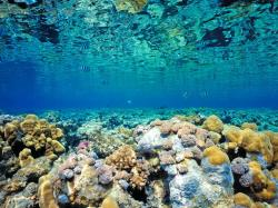 blue coral sea and fish background picture