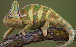 Reptiles - Photo #02
