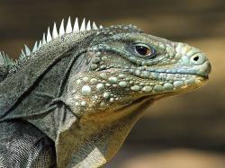 Category Reptiles Lizard Reptile Picture