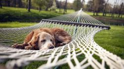 Dog resting in a hammock wallpaper 1366x768