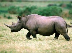 Rhino- Photo#01