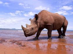 free Rhinoceros wallpaper wallpapers download