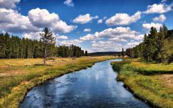 3918 Views 2372 Download River Between Long Trees