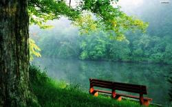 Glamorous Forest Wallpaper: Inspiring Bench by The River Wallpaper 1680x1050px