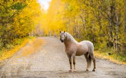 Road Horse Autumn