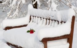 Rose Bench Winter