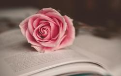 Flower Pink Rose Book Mood