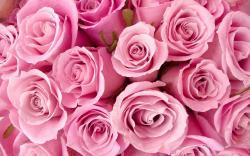 Rose Flower Wallpaper Tumblr