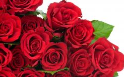 Red Rose Flower Images 17 HD Wallpapers
