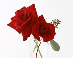 Rose Flower Images 142 HD Wallpapers