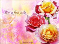 Flowers Rose Flower