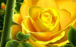 Rose Flower Pictures