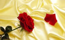 Free Rose Pictures 26831 2560x1600 px. Category: Flowers Resolution: 2560x1600px