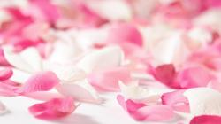 Pink rose leaves image with white background