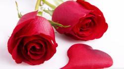 Red Rose 01 Red Rose 02 ...
