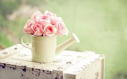 Roses Pink Flowers Watering Can