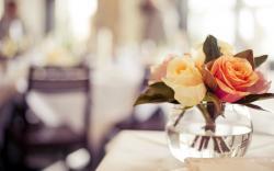 Roses Vase Close-Up