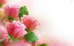 roses wallpaper 5 Best Wallpaper