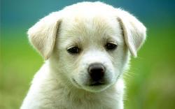 Desktop sad dog pictures dowload