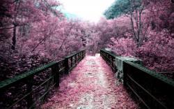 Nature Sakura Flowers Wallpaper HD Wallpaper